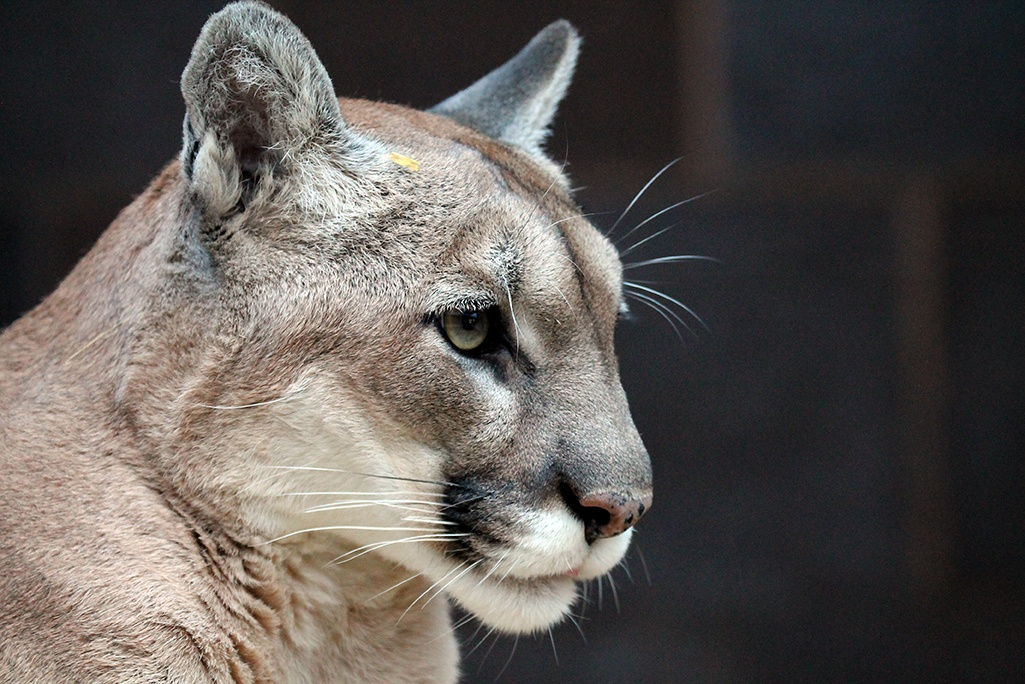 Visit ZooAmerica in Hershey, Pennsylvania to see animals from all across North America