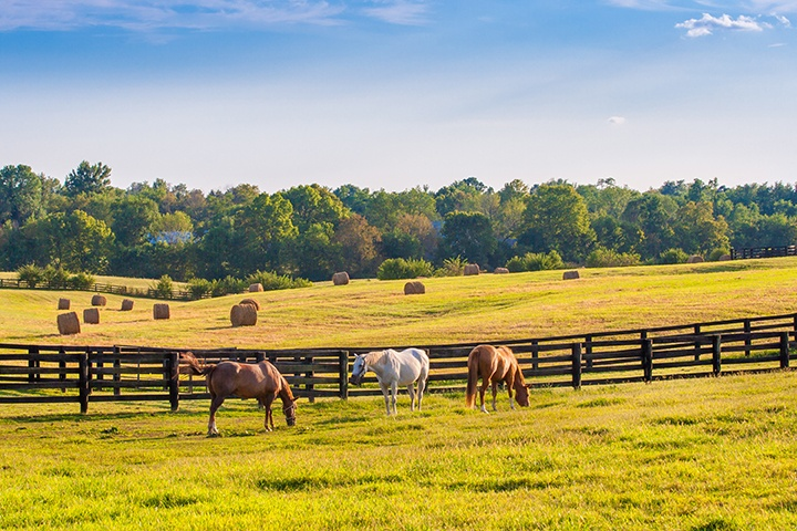 In Kentucky, RV snowbirds traveling on I-75 to florida can visit horse farms.