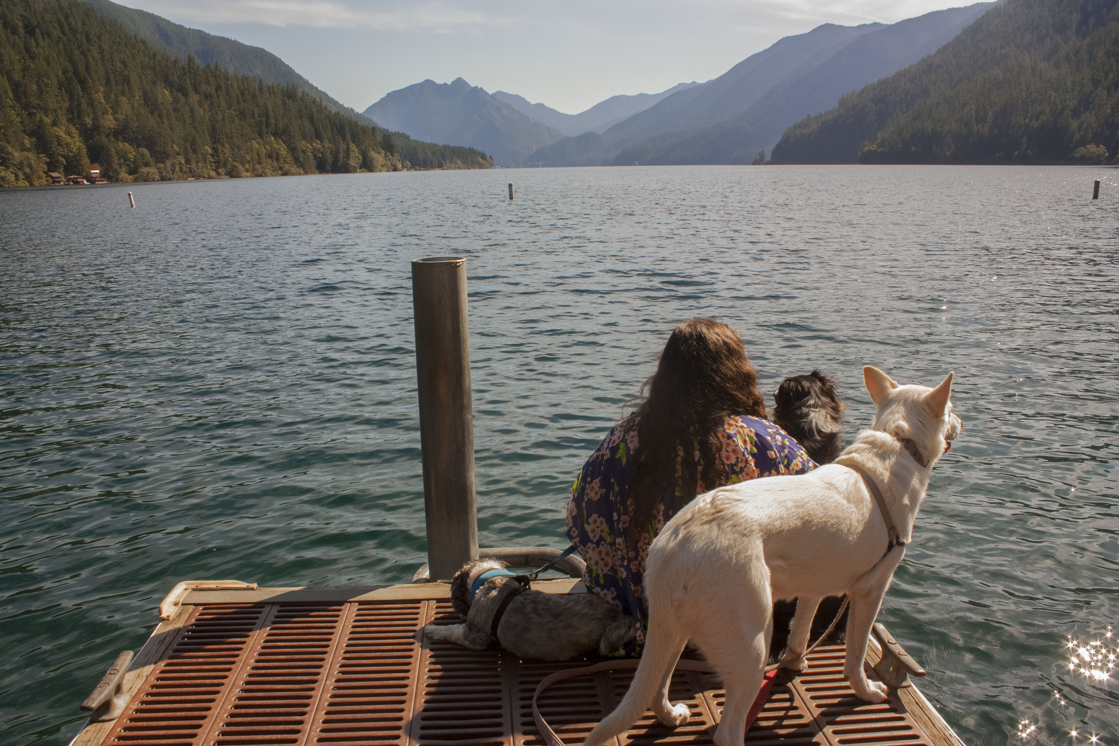 Full-time RVers Life Among Pines look out over Lake Crescent in Olympic National Park with their dogs