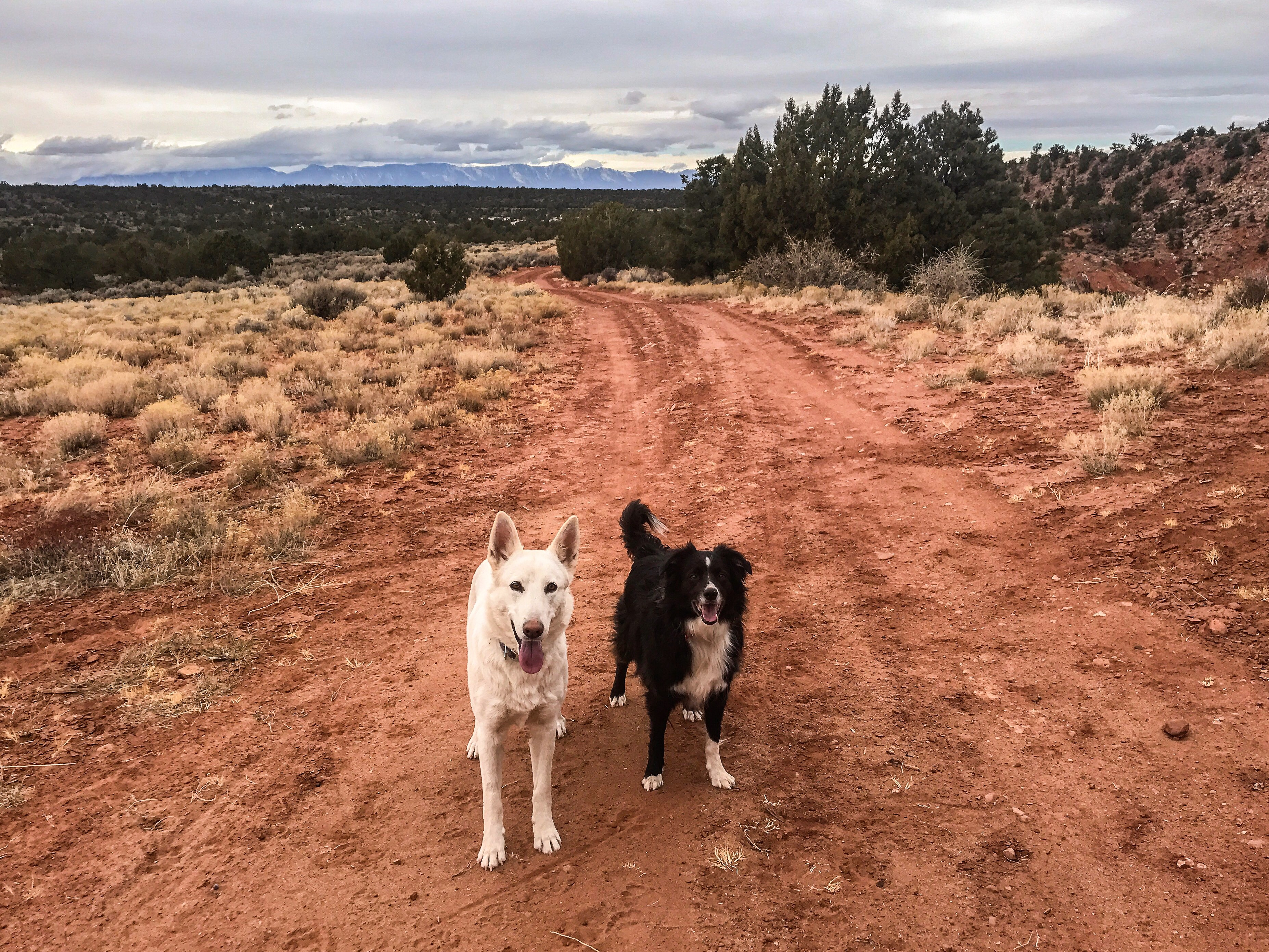 Dogs walking in Zion National Park