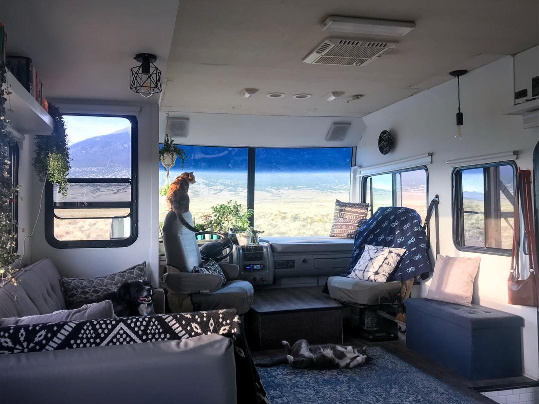 Cats relaxing in an RV