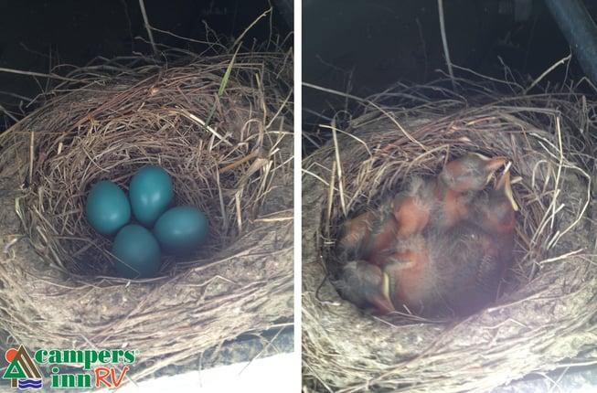 How to move a birds nest