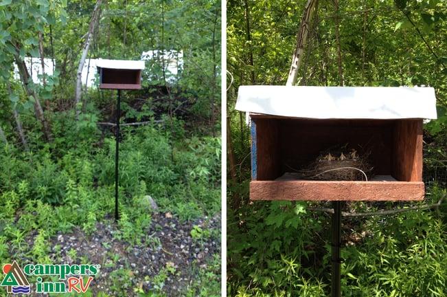 How to build a bird's nest