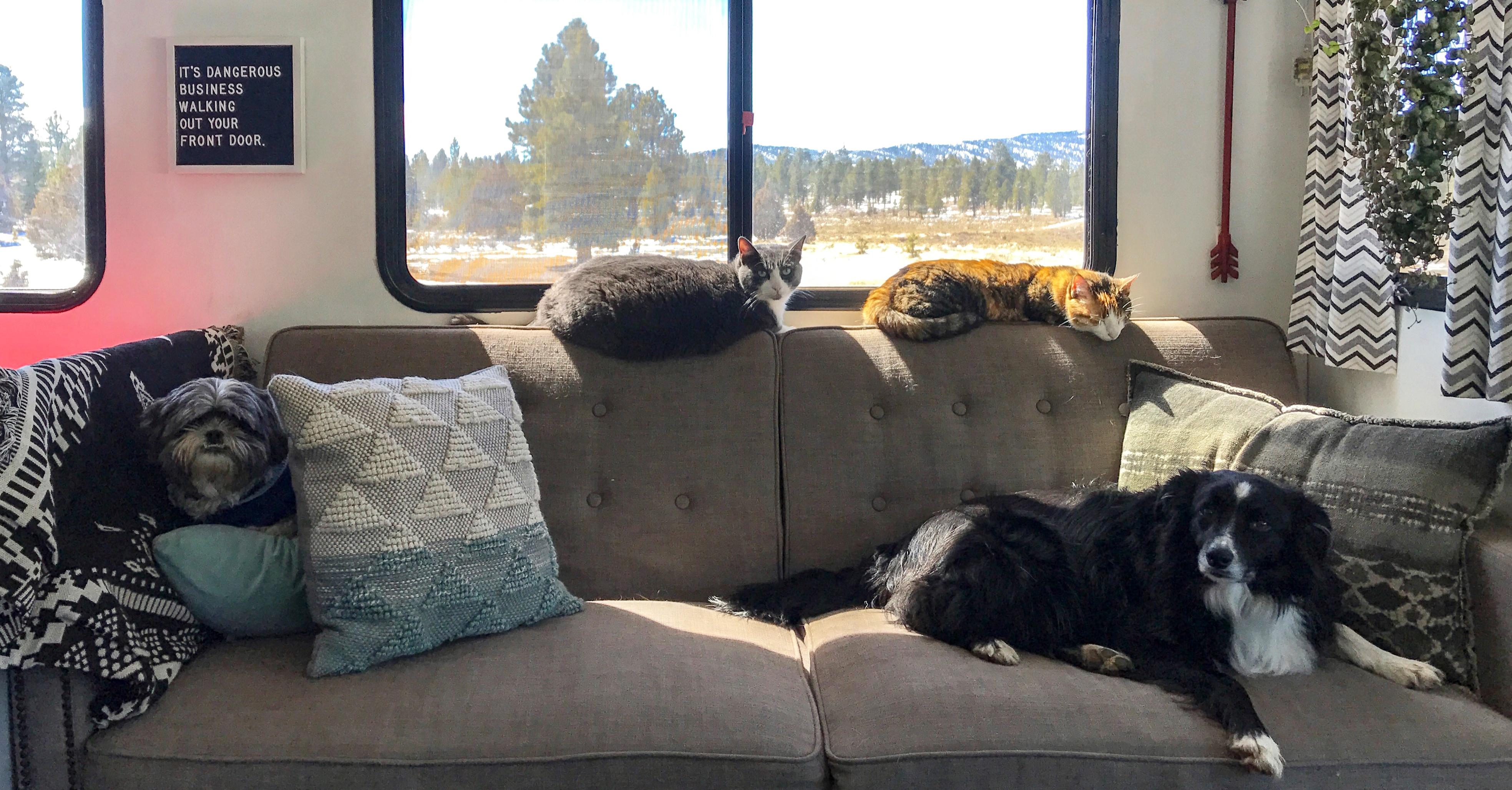 Pets enjoying our cozy home FB crop